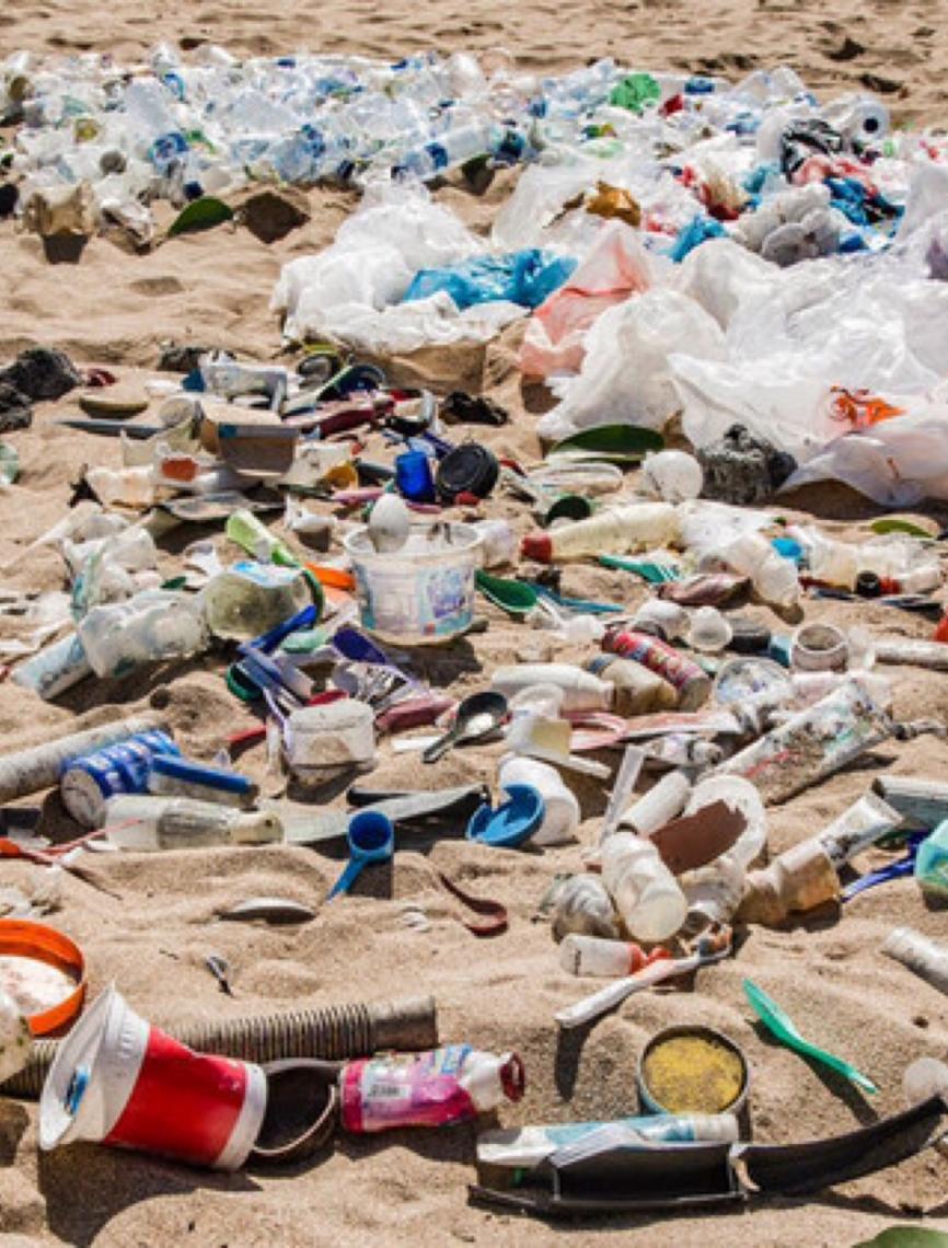 Pnuma: microplásticos, microesferas e plásticos descartáveis contaminam vida marinha e afetam humanos