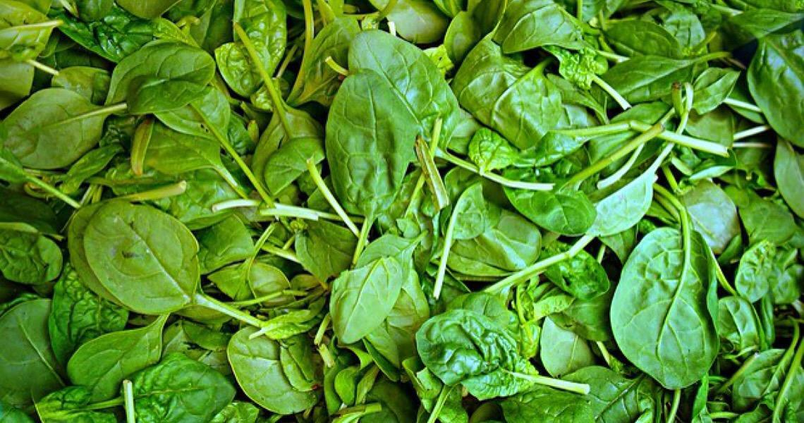 Popaye já ensinava: comer espinafre é fundamental para uma boa saúde
