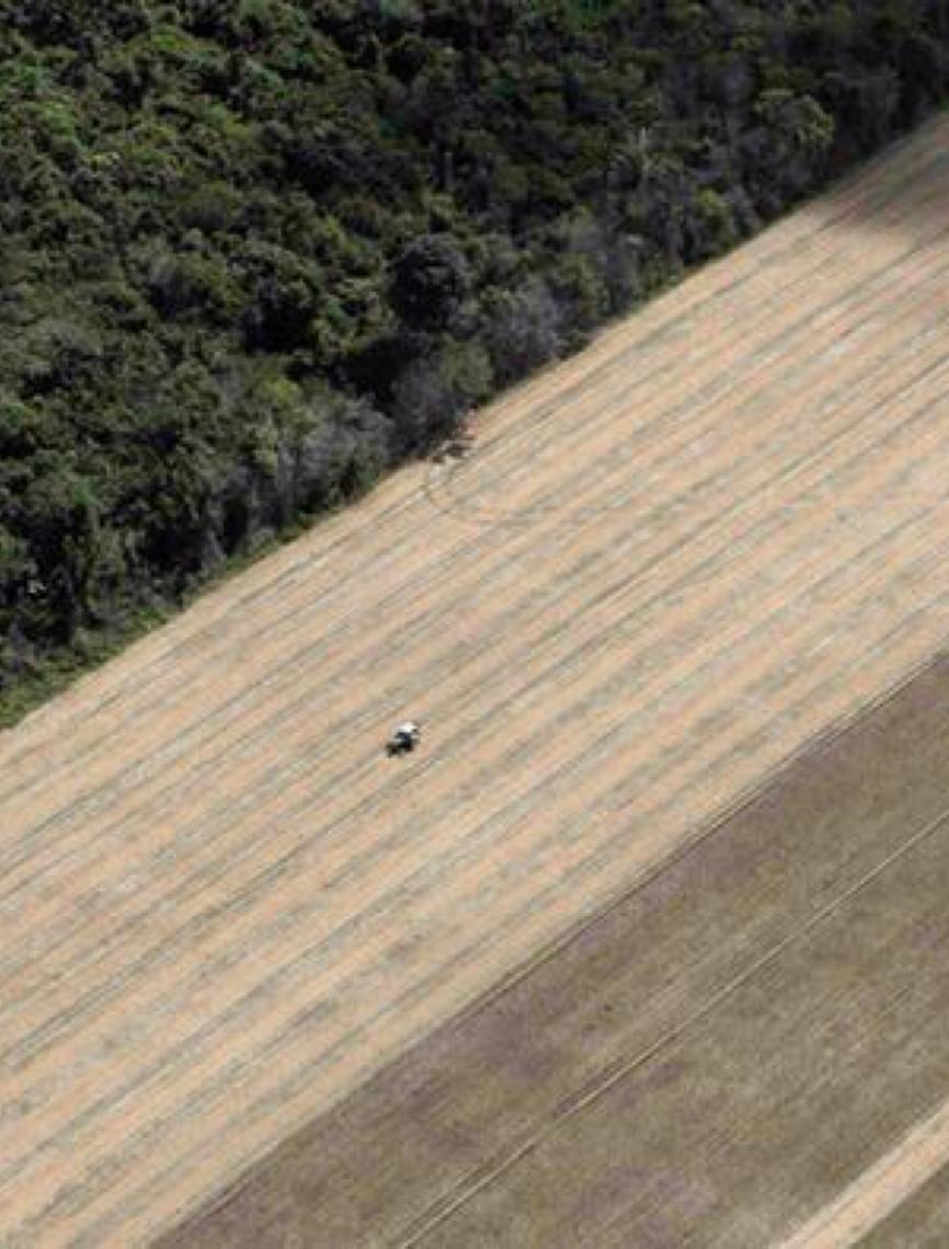 Desmatamento já reduz chuvas e pode afetar safra no sul da Amazônia