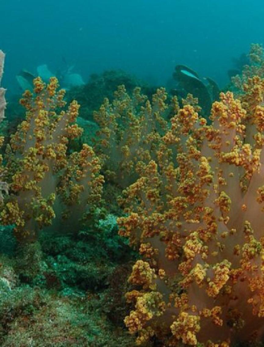 Desastre ambiental no litoral do Nordeste é um dos maiores da história mundial