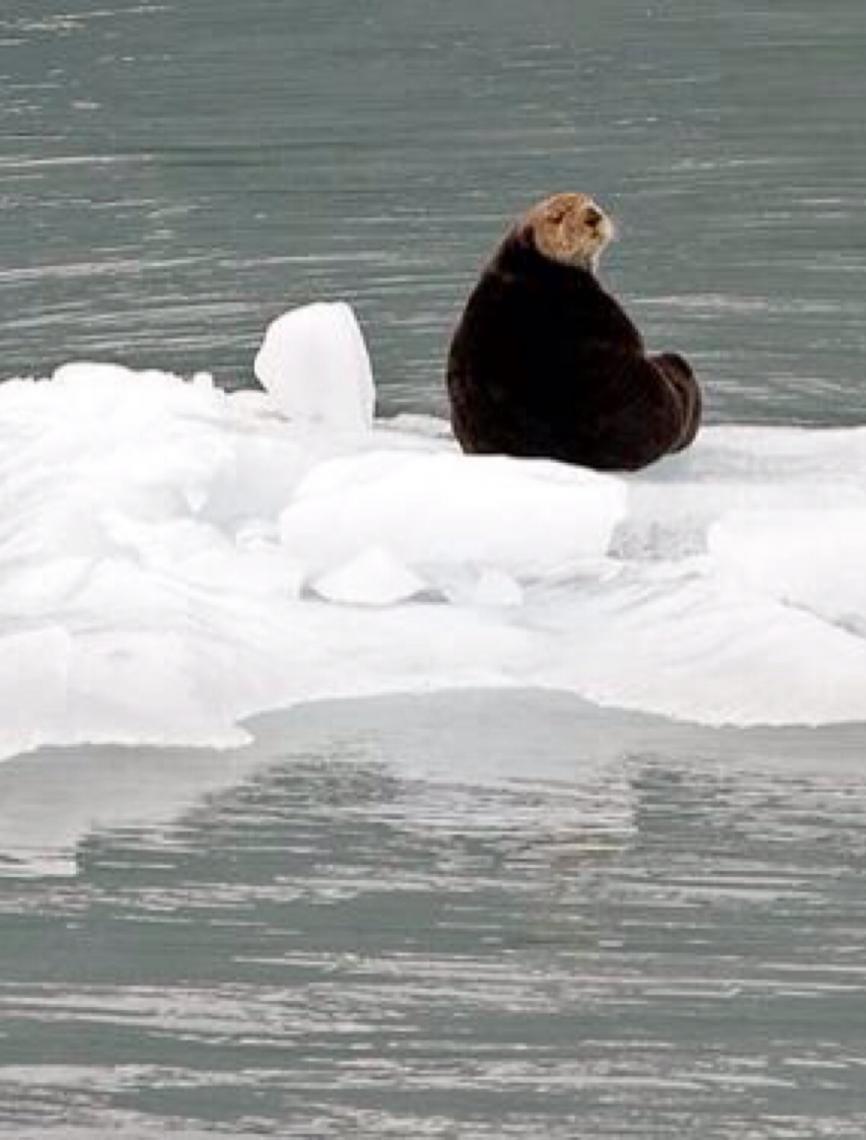 Aquecimento global é suspeito de fazer vírus cruzar oceanos