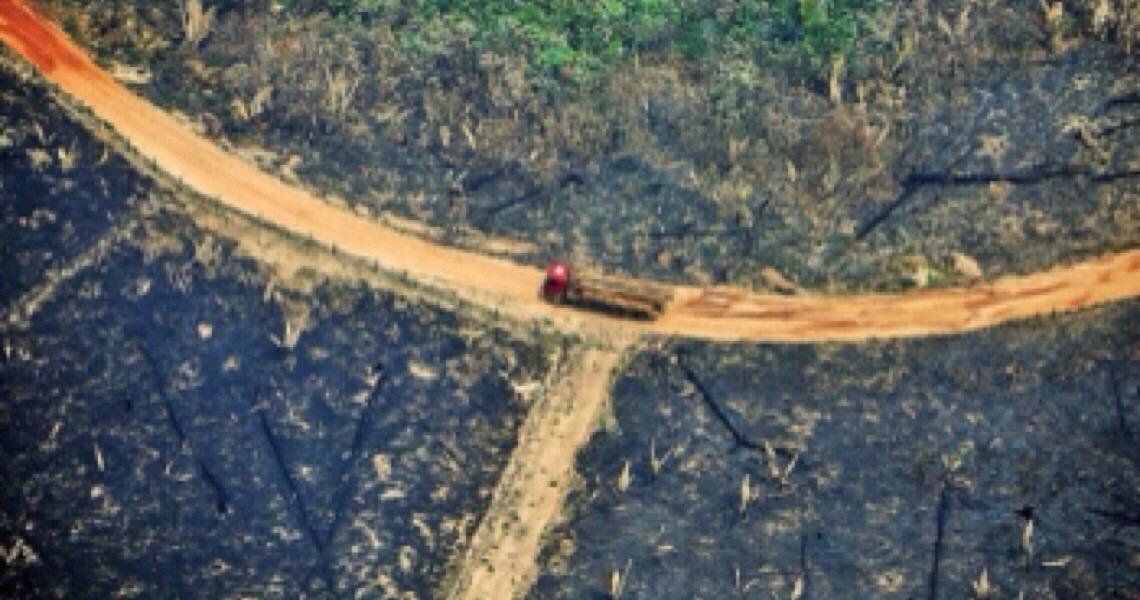 Precisamos identificar e punir os bandidos na Amazônia
