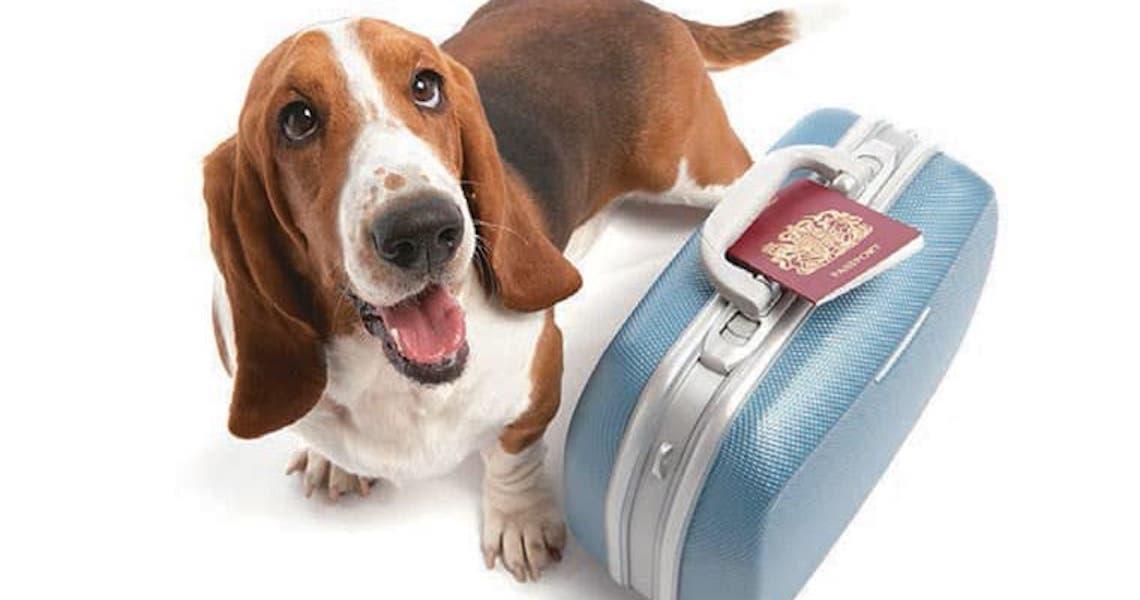 Cuidados para viagem com o seu Pet!