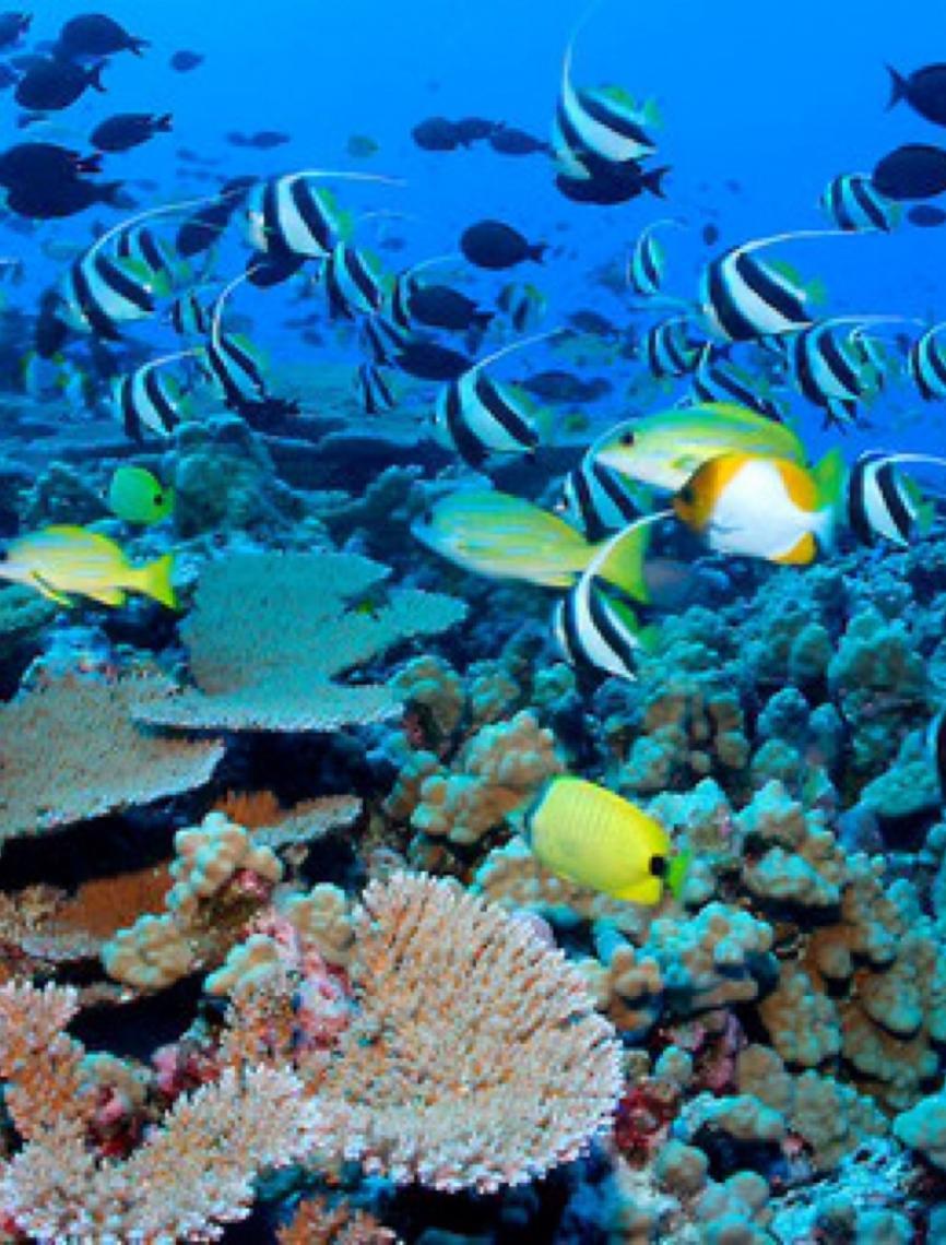 Ministro do Mar de Portugal destaca importância do setor pesqueiro para países lusófonos