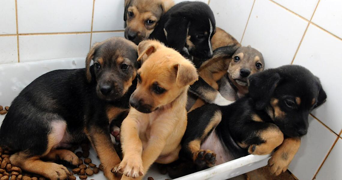 Zoonoses promove a quinta edição da Feira de Adoção de Animais
