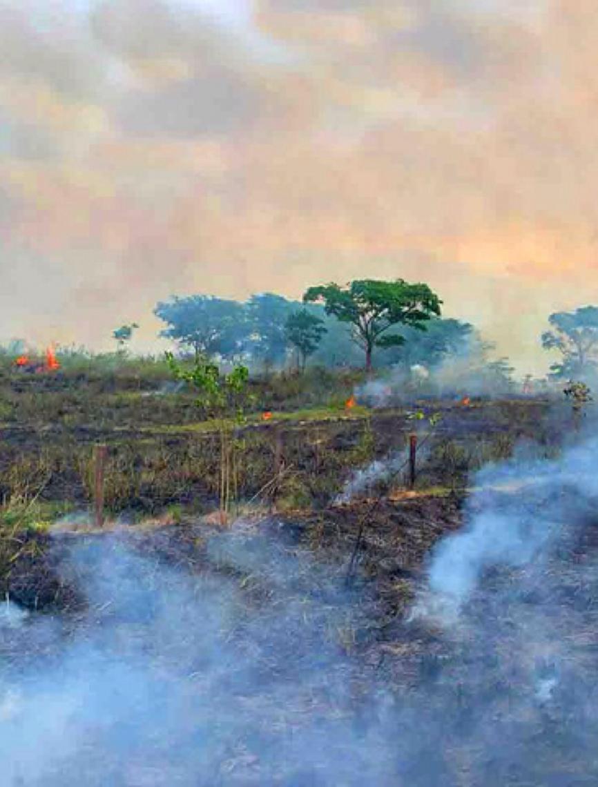 Área devastada da Amazônia nunca será capaz de recuperar o seu bioma original