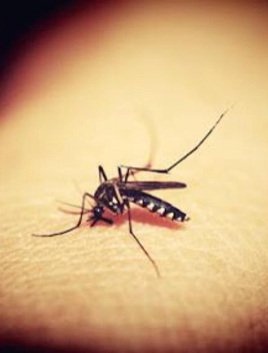 Descoberta abre caminho para bloquear a transmissão da malária no Brasil