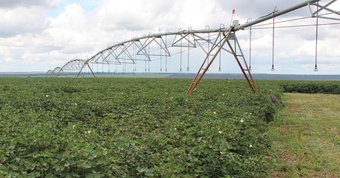 Governo federal autoriza ocupação de produtores em polo de irrigação na Bahia