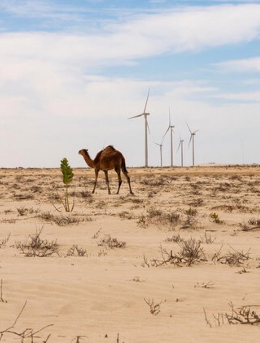 COP25: Conheça cinco destaques da Conferência das Nações Unidas sobre Mudança Climática