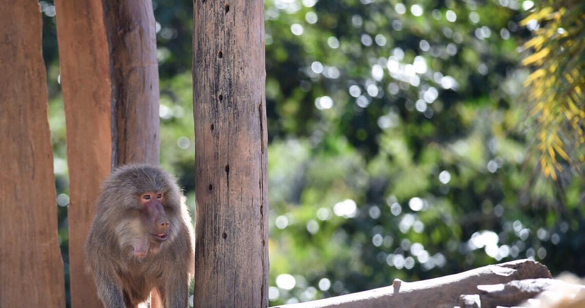 Zoológico de Brasília faz 62 anos