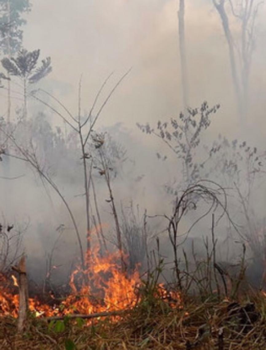 Brasileiro recebe menção honrosa em festival sobre mudança climática