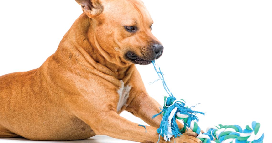 Estresse passa do dono para o cachorro
