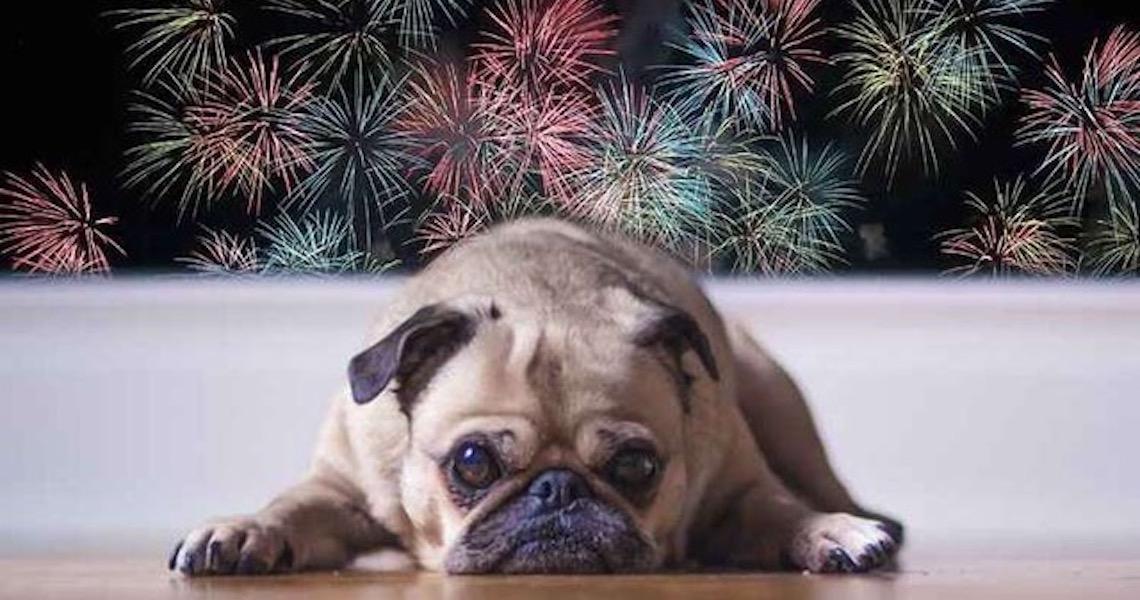 Fobia de fogos: Os cães, particularmente, apresentam muita sensibilidade a estímulos sonoros
