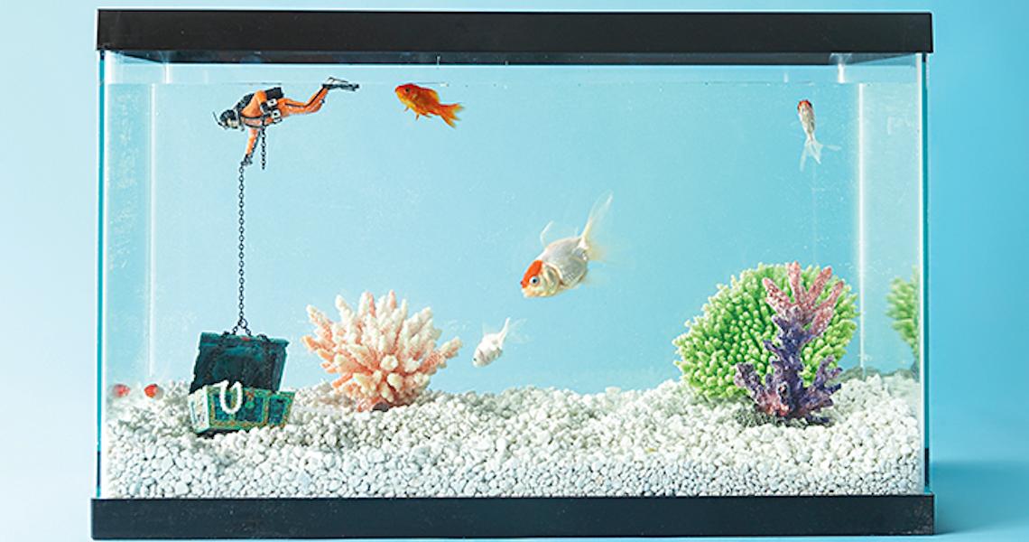 Peixes de estimação exigem cuidados especiais