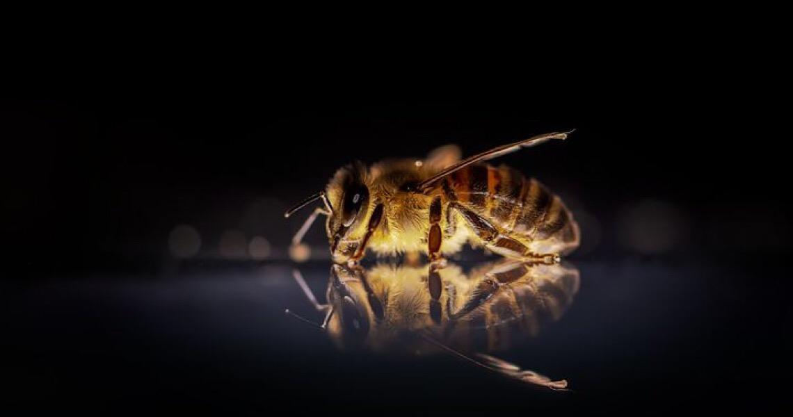 Agrotóxico mais encontrado em frutas e verduras no Brasil é fatal para abelhas