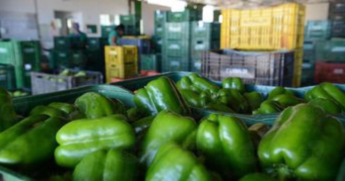 Maioria dos vegetais é segura para consumo; 8% têm irregularidades