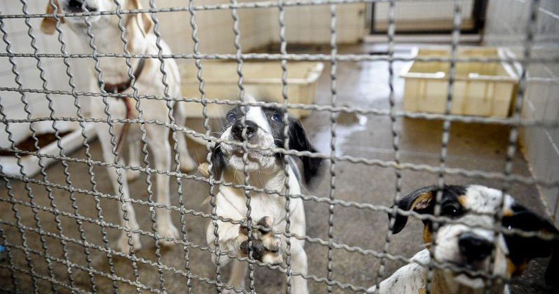 Câmara dos Deputados endurece penas para quem comete maus-tratos a animal doméstico