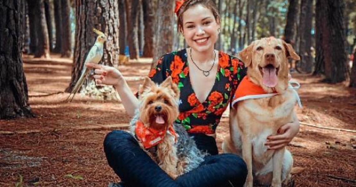 Banco de sangue pet, cães e gatos também podem doar e receber sangue