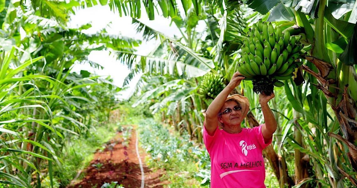 Mulheres se destacam na produção agrícola no Distrito Federal; conheça exemplos