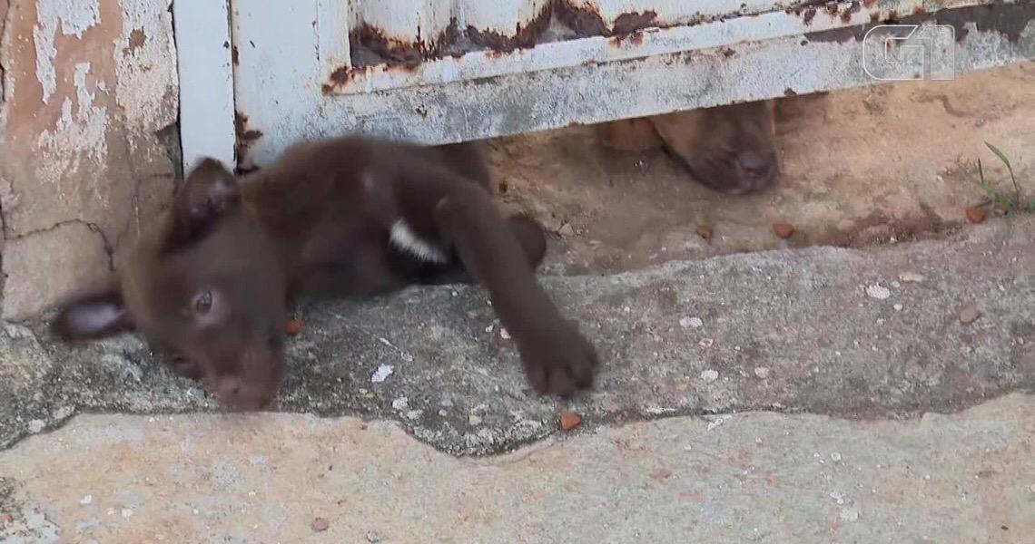 Cachorros são abandonados sem comida em condomínio no Distrito Federal