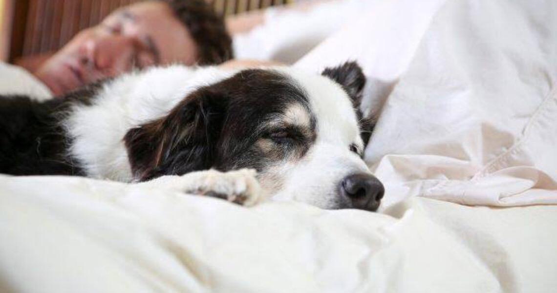 Animais de estimação podem melhorar a qualidade de vida dos donos