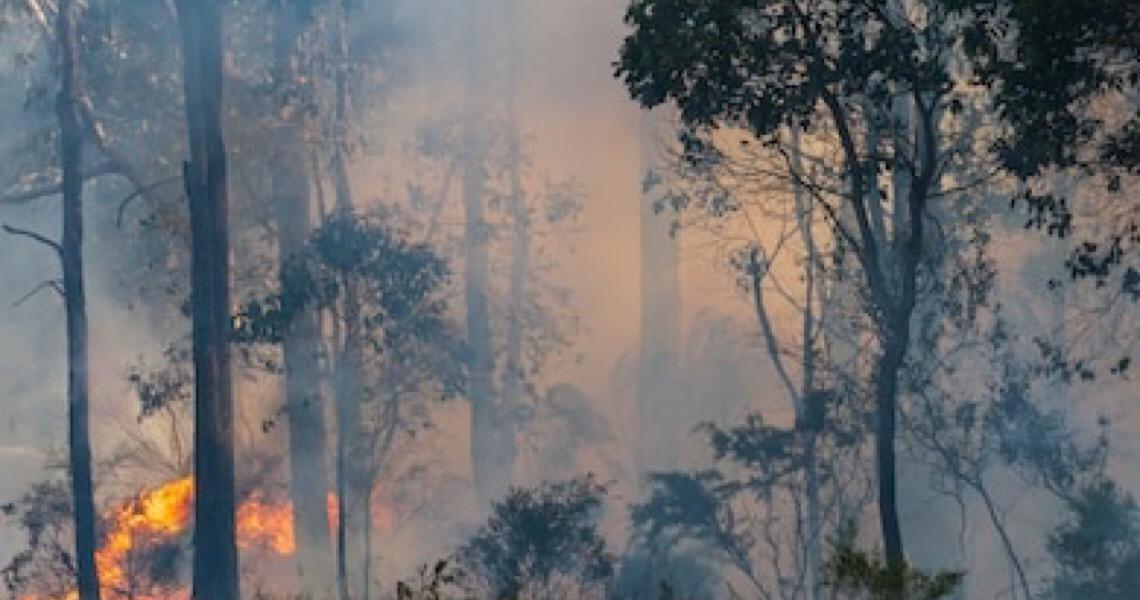 Austrália está livre da polícia ambiental do mundo; o Brasil não