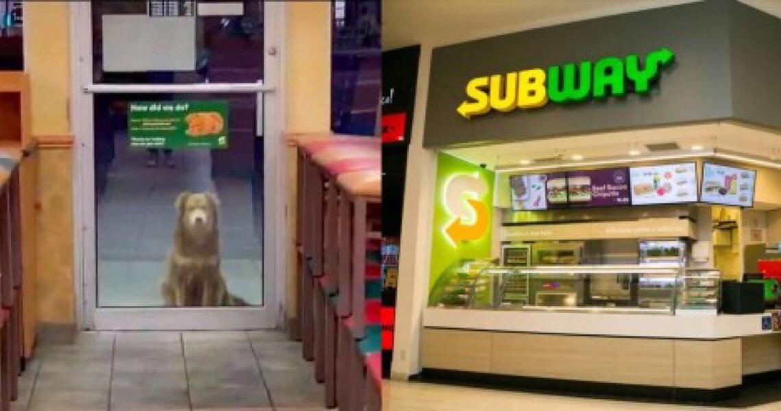 Cão de rua visita o Subway todos os dias para uma refeição grátis de funcionário super gentil