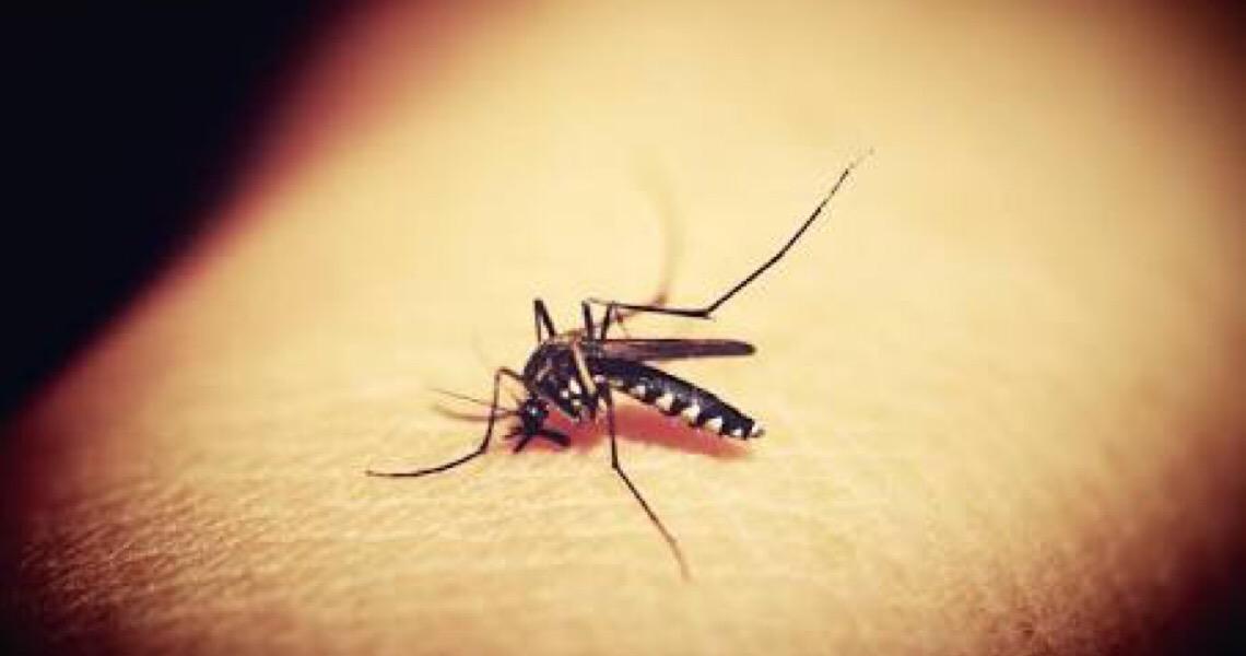 Brasil teve aumento de 488% nos casos de dengue em 2019