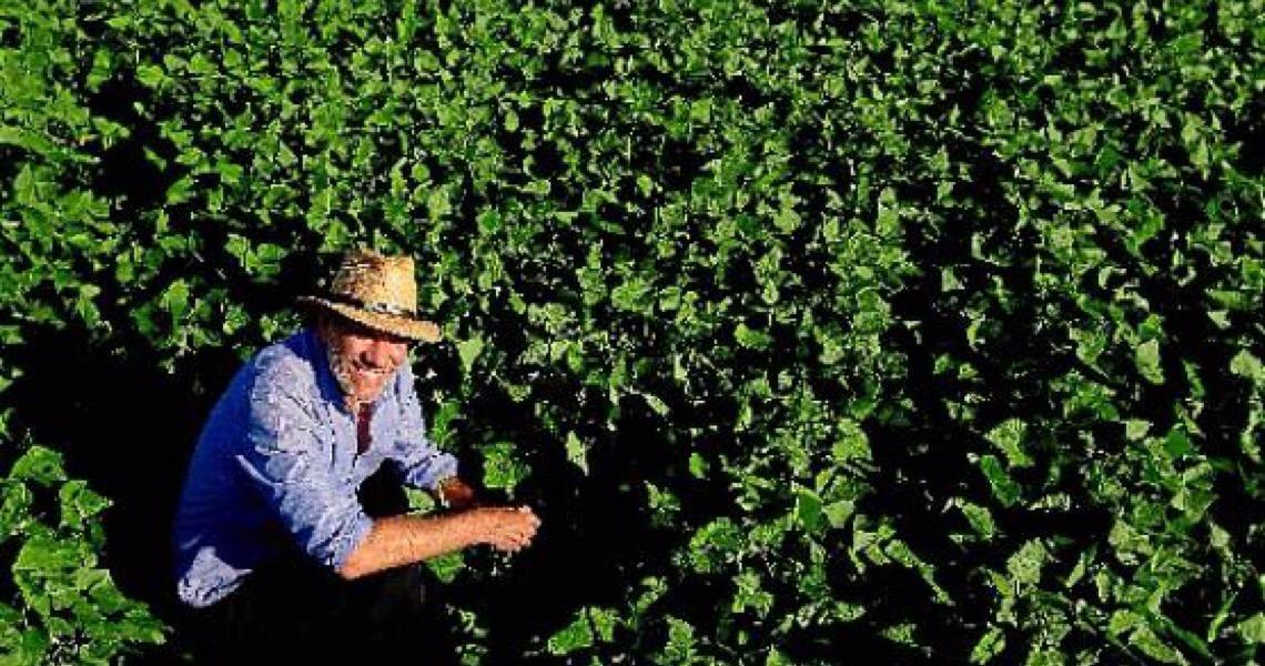 Celeiro em constante evolução. Brasil, um país privilegiado para o desenvolvimento agrícola