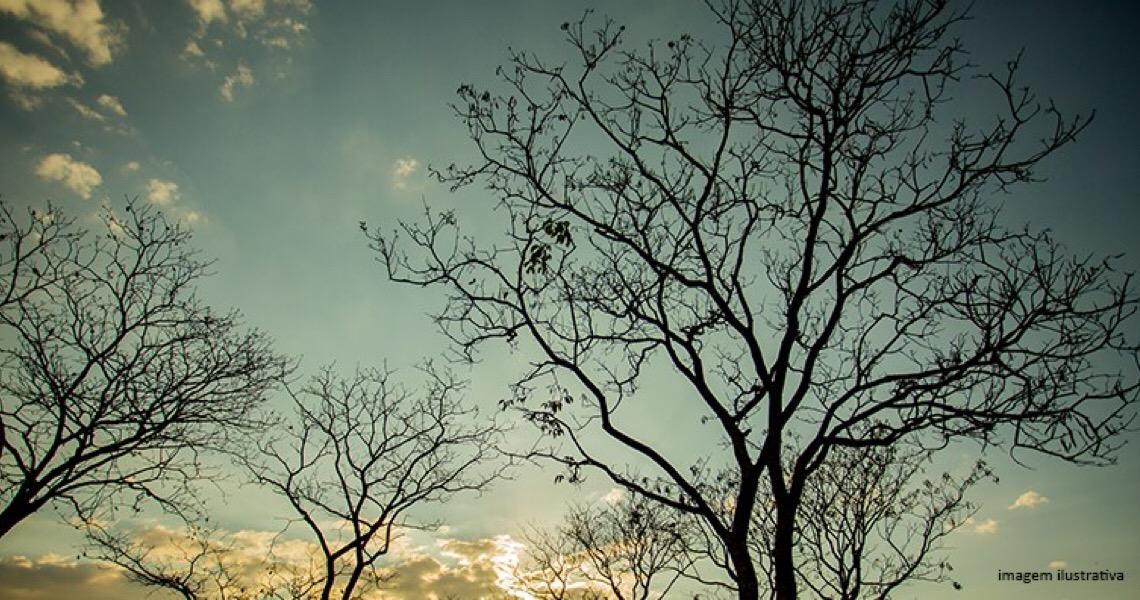 Justiça suspende corte de árvore na CLS 208