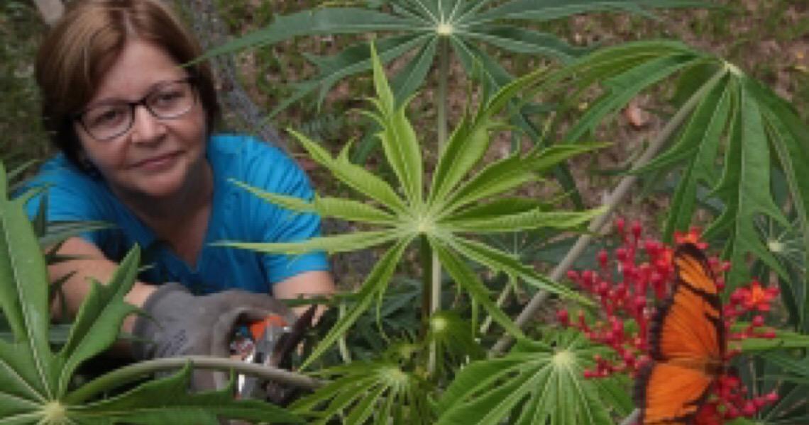 São Paulo amplia uso de planta medicinal e distribui 6,7 milhões de fitoterápicos