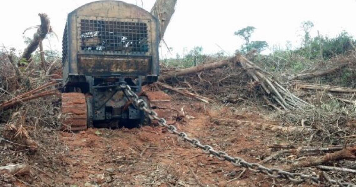 Não é a pobreza que destrói a floresta; quem o faz precisa ter capital, muito capital…
