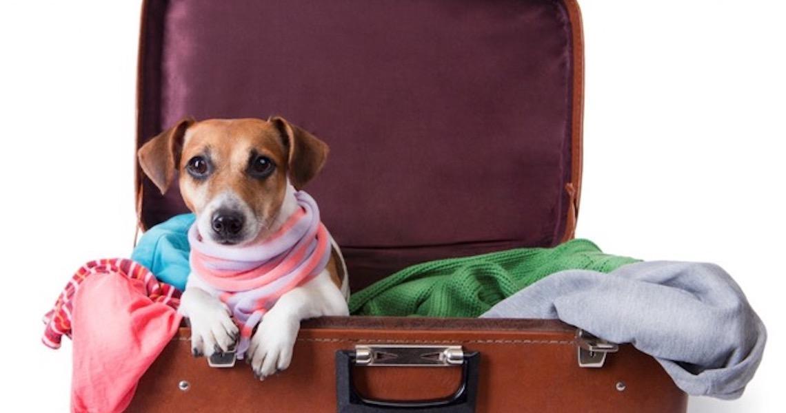 Cuidados para viagem com o seu Pet