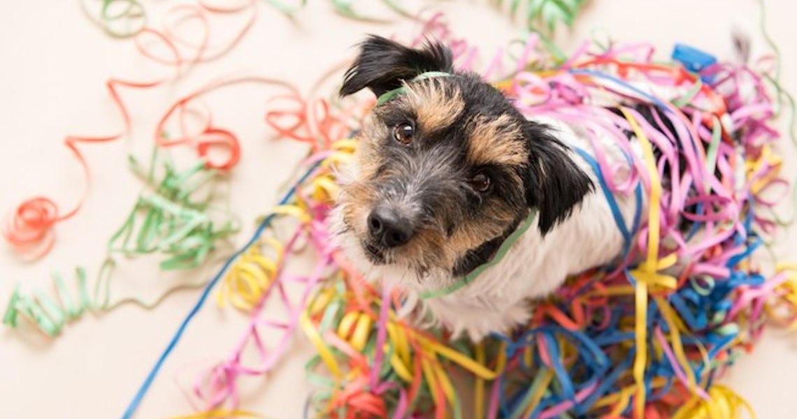 Glitter em cachorro pode? Veterinária responde