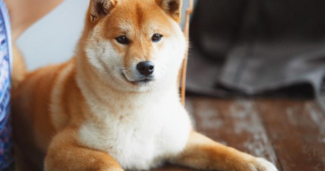 Veterinários listam as raças de cachorro com temperamento mais difícil