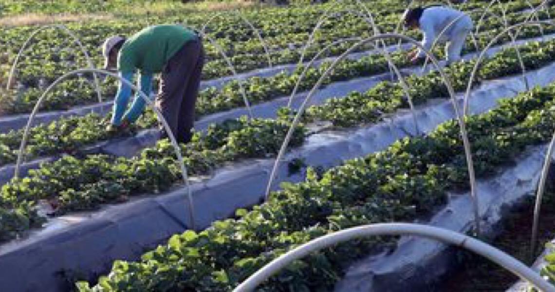 Cresce número de agricultores com acesso ao seguro rural