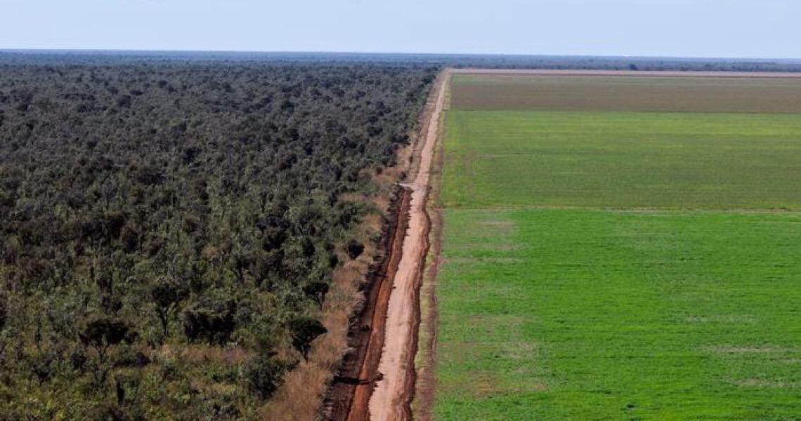 Desmatamento ilegal em latifúndios avança sobre o Cerrado
