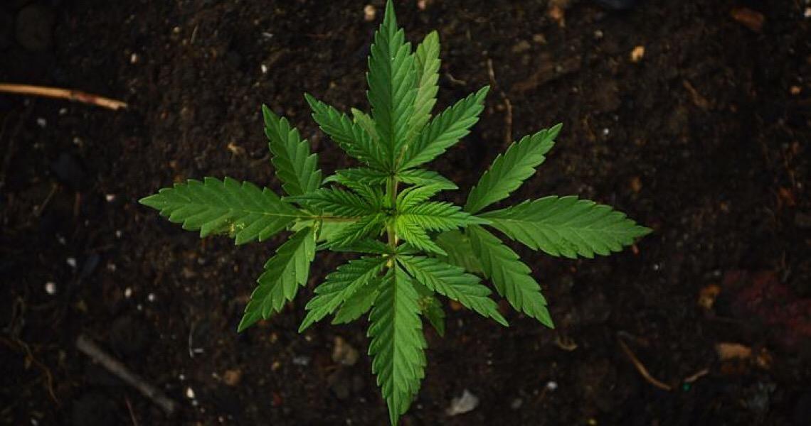 Encontro neste fim de semana, discutiu investimento no mercado da cannabis