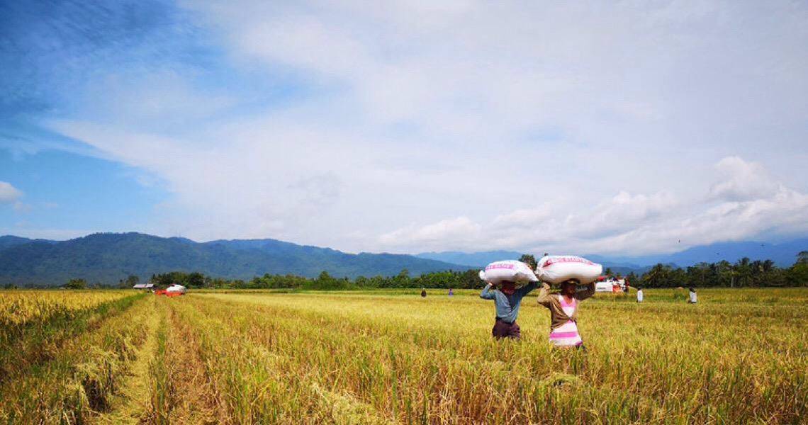 FAO marca Dia Mundial das Leguminosas destacando benefícios da biodiversidade do solo