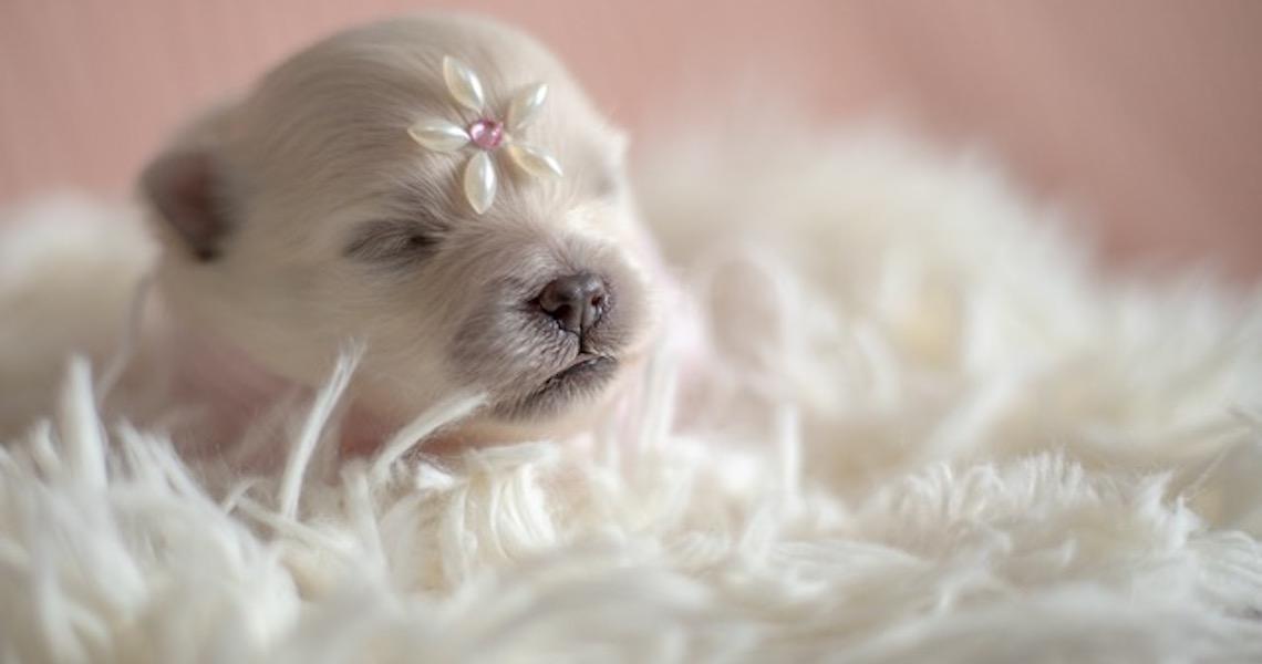 Fotógrafa realiza ensaio inusitado de new born para pets em Brasília
