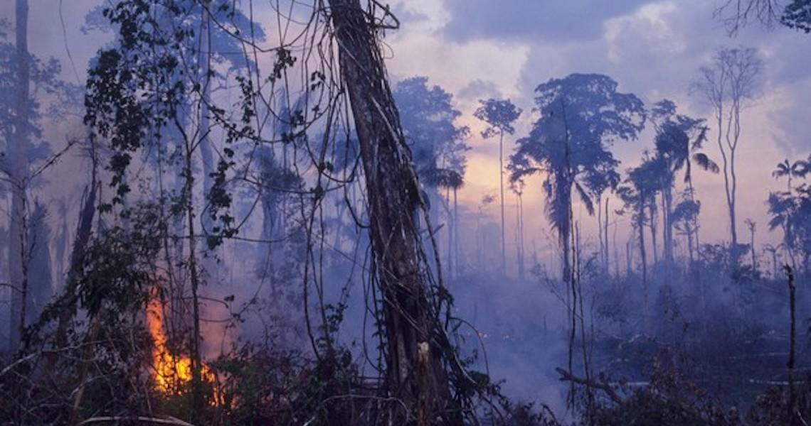 Exclusivo: os 10 países que mais vão perder dinheiro por perdas da natureza; Brasil está na 6º posição