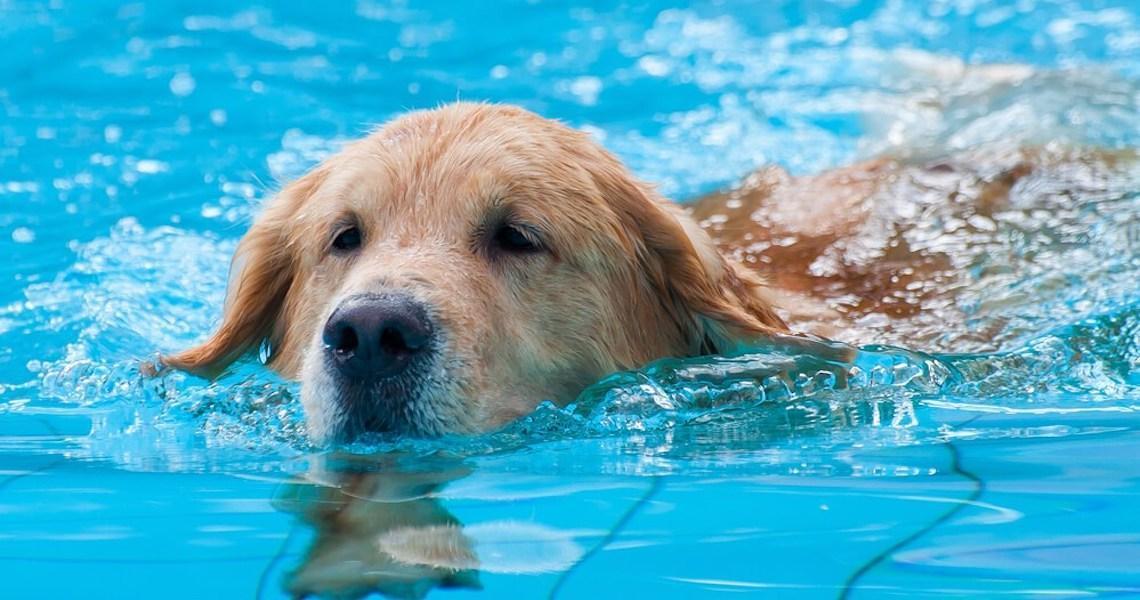 Veja seis cuidados para se ter em banho de piscina com bichos de estimação