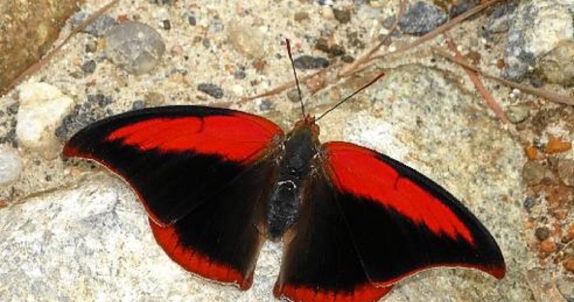Estudo internacional mostra insetos em colapso