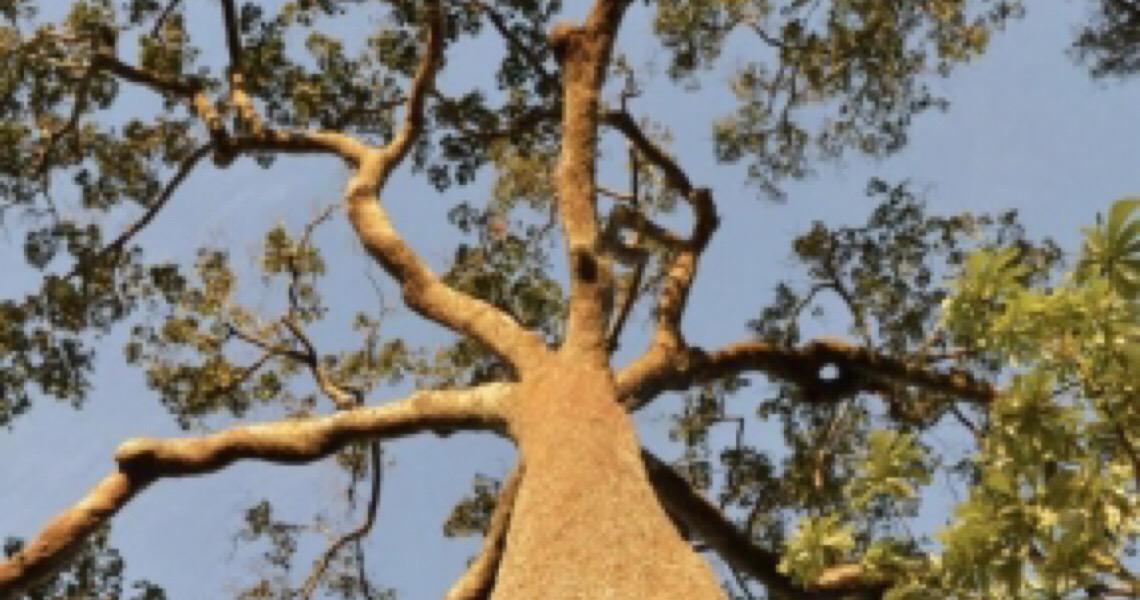 Desenvolvimento Sustentável da Amazônia, é possível, mas falta vontade política
