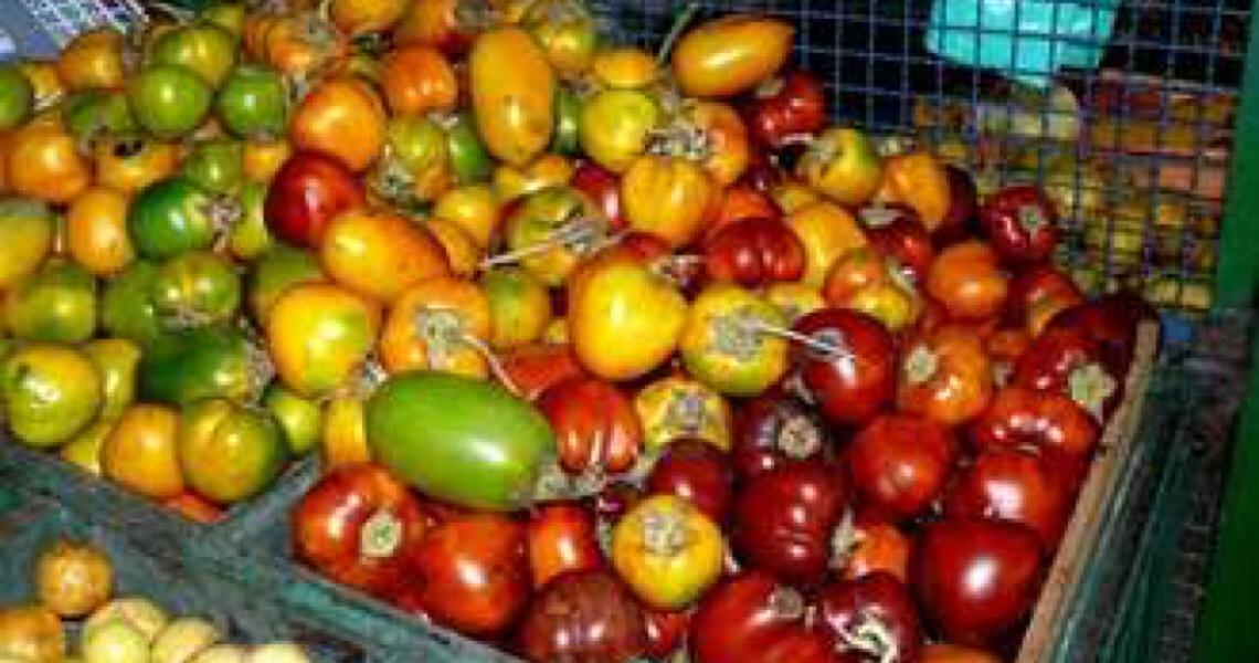 Dieta mediterrânea melhora a flora intestinal e protege o coração
