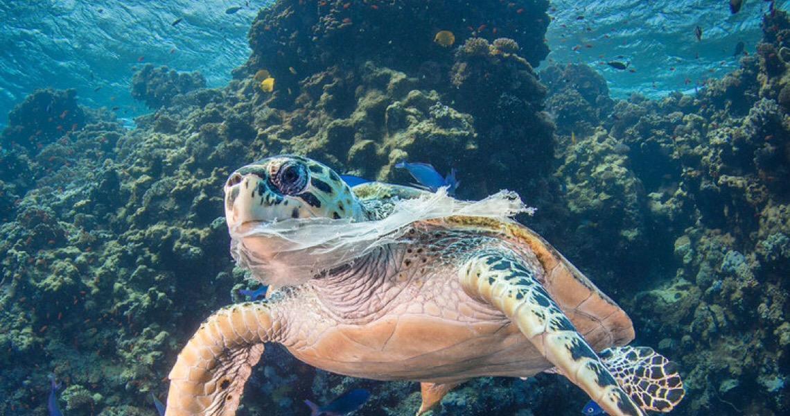 Em Genebra, Portugal convida o mundo à Conferência sobre os Oceanos