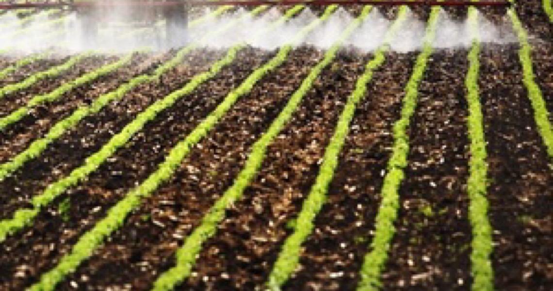 Ministério da Agricultura publica registro de 16 defensivos agrícolas