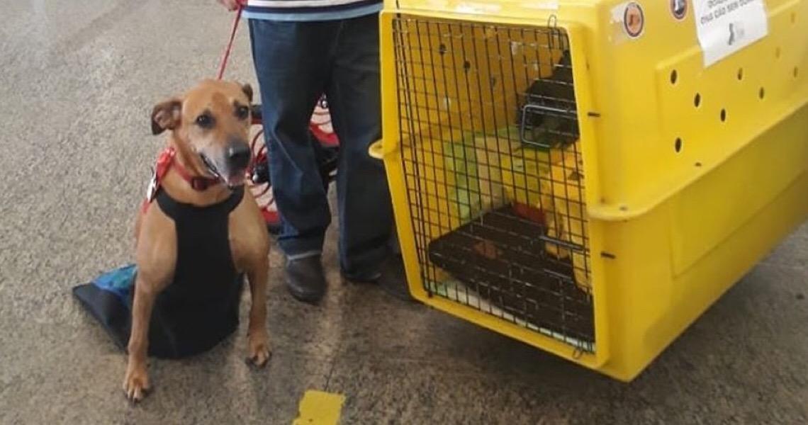 Homem viaja 2,5 mil km para adotar cão com patas amputadas