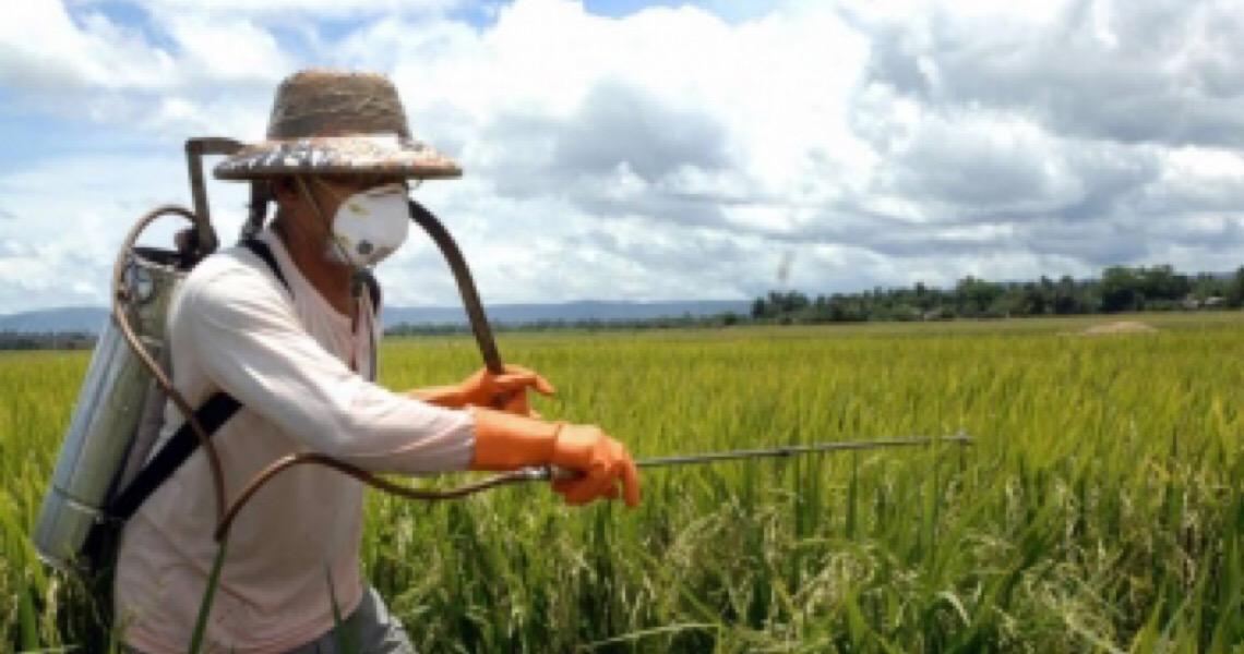 Nova ação no Supremo questiona portaria do Ministério da Agricultura que simplifica registro de agrotóxicos
