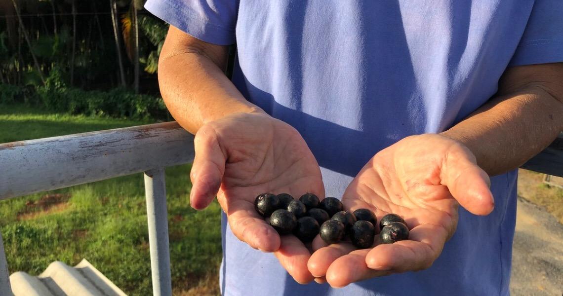 'Cerrado também dá açaí, é só cuidar', diz agricultora responsável por produção no DF